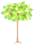 Spring flowering tree Royalty Free Stock Photos