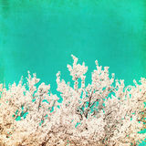 Spring flowering tree on blue textured sky Royalty Free Stock Photography