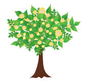 Spring flowering tree. Color vector illustration of a decorative tree with flowers vector illustration