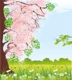 Spring flowering tree, Stock Photos