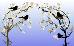 Spring flowering trees with a nest and silhouettes of birds Stock Photos