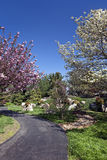 Spring Flowering Trees on a Park Pathway Royalty Free Stock Image