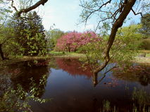 Spring flowering trees. Royalty Free Stock Image