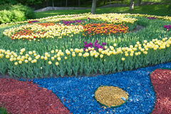 Round flower bed of blooming tulips in the park. Spring flowering of tulips, hundreds of bright colors on flowers in the park. Kiev, Ukraine Royalty Free Stock Photography