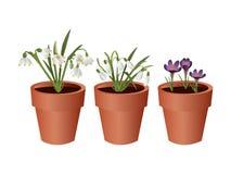 Spring flowerpots Stock Image