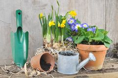Spring flowerpots Royalty Free Stock Image