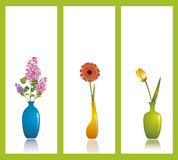 Spring flowers. Three spring flowers: lilac, gerbera (African daisy) and tulip in vases against white background Stock Photography
