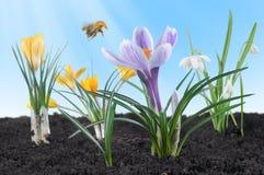 Free Spring Flowers Royalty Free Stock Photos - 12553198