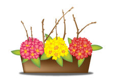 Spring Flowers. Illustrated primroses and willow catkin in a flower box Stock Photos