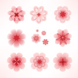 Spring flowers. Pink spring cherry flowers collection for your design Stock Photography