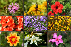 Free Spring Flowers Stock Images - 13783084