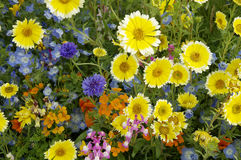 Spring flowers. Colorful spring flowers in a garden Stock Image