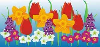 Spring flowers. Frieze with daffodils and tulips Royalty Free Stock Photo