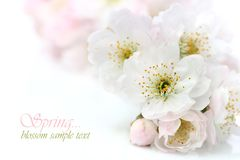 Free Spring Flowers Royalty Free Stock Images - 19030889