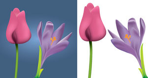 Spring Flowers. Two sets of spring flowers. One on blue background, the other isolated on white background Royalty Free Stock Photo