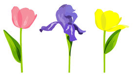 Spring flowers. Stock Images