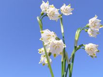Spring flowers. On clear blue sky background Royalty Free Stock Photos