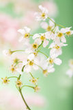 Spring flowers Royalty Free Stock Images