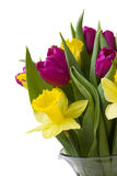 Spring flowers. Bouquet of purple tulips and yellow daffodils Stock Images