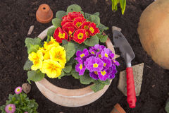 Free Spring Flowers Royalty Free Stock Photography - 28998007