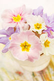 Spring flowers Royalty Free Stock Image