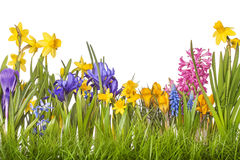 Free Spring Flowers Royalty Free Stock Photo - 30318295