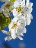Spring flowers Stock Images