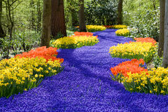 Spring flowers. Beautiful field of spring flowers with narcissus, tulips and muscari