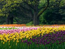 Spring flowers. Beautiful park in the spring Stock Image
