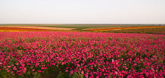 Spring flowers. A field of spring flowers (panoramic composition Stock Photography