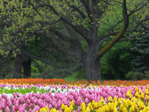 Spring flowers. Beautiful park in the spring Royalty Free Stock Image