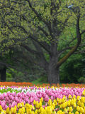 Spring flowers. Beautiful park in the spring Royalty Free Stock Photography