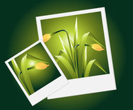 Spring flowers Royalty Free Stock Photos