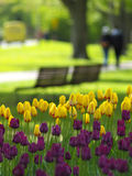 Spring flowers. Spring park, tulips in foreground, two girls walking in background Stock Images