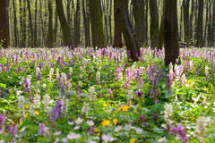 Spring flowers. Forest of brightly coloured flowers Stock Image