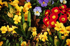 Spring flowers. Assorted flowers in early spring Royalty Free Stock Photos