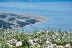 Spring flowers above the turquoise blue sea in the bay stock image