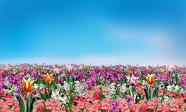 Spring flowers abstract background Royalty Free Stock Image