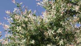 Spring flowers against blue sky stock video