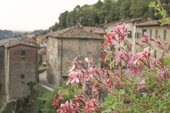 Spring flowers against buildings in Tuscany,  Italy Stock Photography