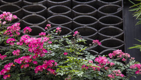 Spring flowers in ancient architecture,chengdu,china Stock Photos