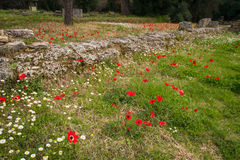 Spring flowers at Ancient Olimpia, Peloponnese, Greece Royalty Free Stock Image