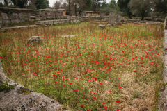 Spring flowers at Ancient Olimpia, Peloponnese, Greece Stock Photos
