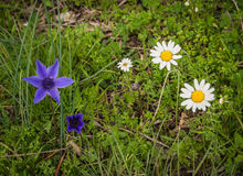 Spring flowers at Ancient Olimpia, Peloponnese, Greece Royalty Free Stock Photos