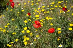 Spring flowers, Andalusia. Royalty Free Stock Image