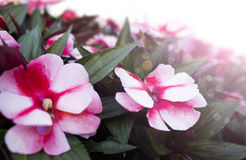 Spring flowers background Stock Photography