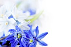 Spring flowers background royalty free stock photo