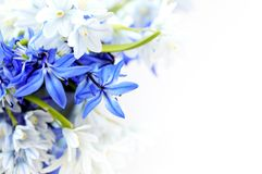 Spring Flowers Background Royalty Free Stock Photography