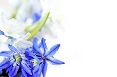 Spring Flowers Background Royalty Free Stock Images