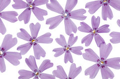 Spring flowers background Stock Image
